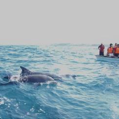 Dolphin tour in Zanzibar near Jambo beach