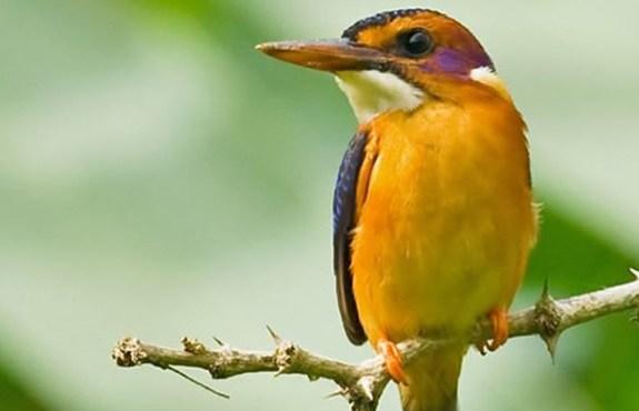Birding Tours in Nairobi