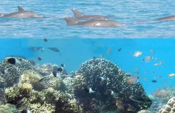 Wasini Island and Kisite Marine Park