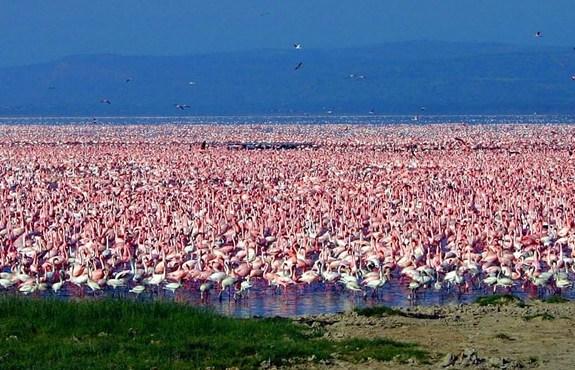 Lake Nakuru Flamingo Tours