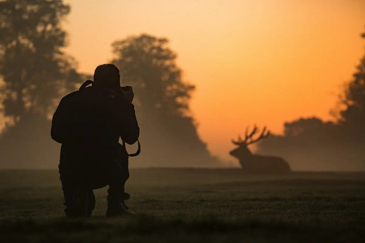 How to be a wildlife photographer