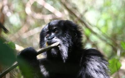 Why Fighting Fire With Fire In DRC's Virunga Park Isn't Helping Conservation