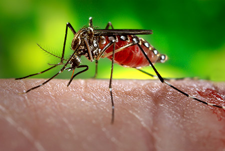 Tanzanian Research Institute Develops Repellent To Control Mosquitoes