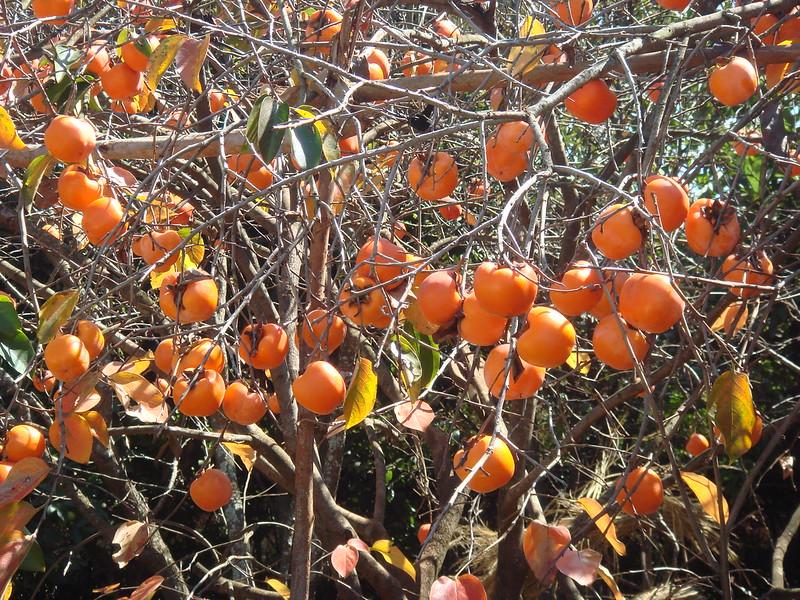 Madagascar Fruits