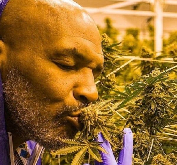 """Mike Tyson: """"Je dépense 40 000 $ en cannabis chaque mois"""""""