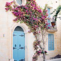 house-flowers