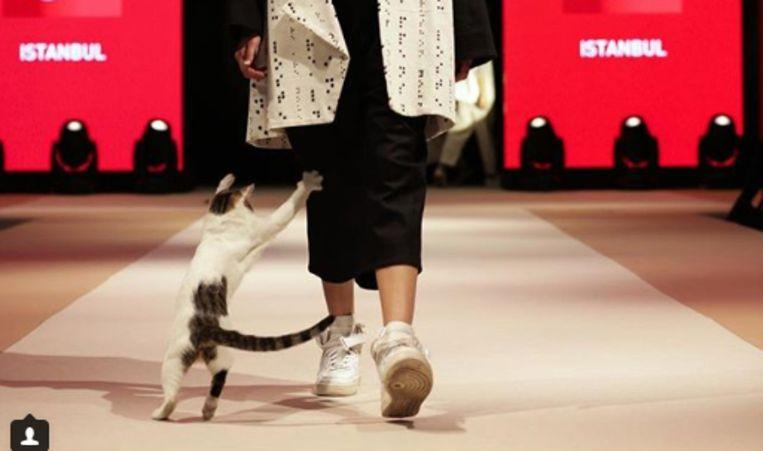 Photo of Cat disrupts fashion show and becomes star of the catwalk