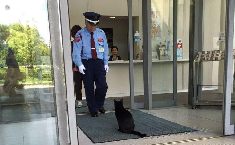 Photo of Guard refused cat in Japanese museum, she invites another cat
