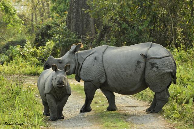Photo of Chinese arrested in Zimbabwe for trafficking rhinoceros horns