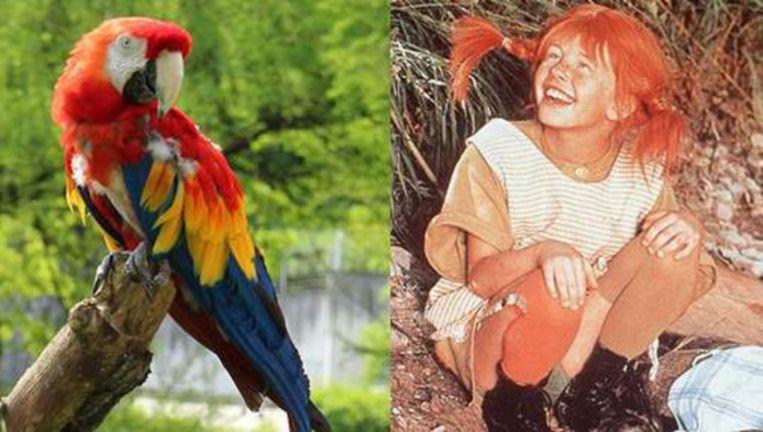 Parrot (51) of Pippi Longstocking died in arms of zoo director