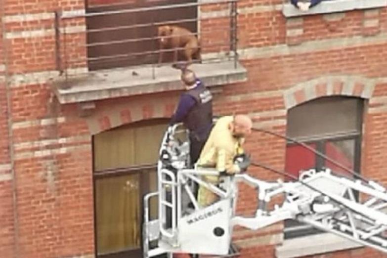 Dog locked up on tiny terrace during stormy weather all night