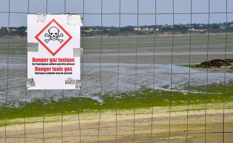 "Photo of Toxic algae plague Breton beaches: ""They can kill you in seconds"""