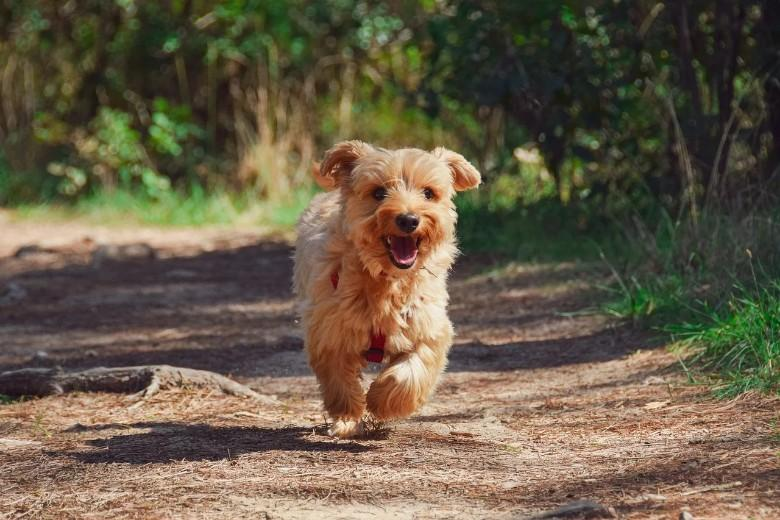Not 7 human years: this is how you calculate the 'real' age of Dog