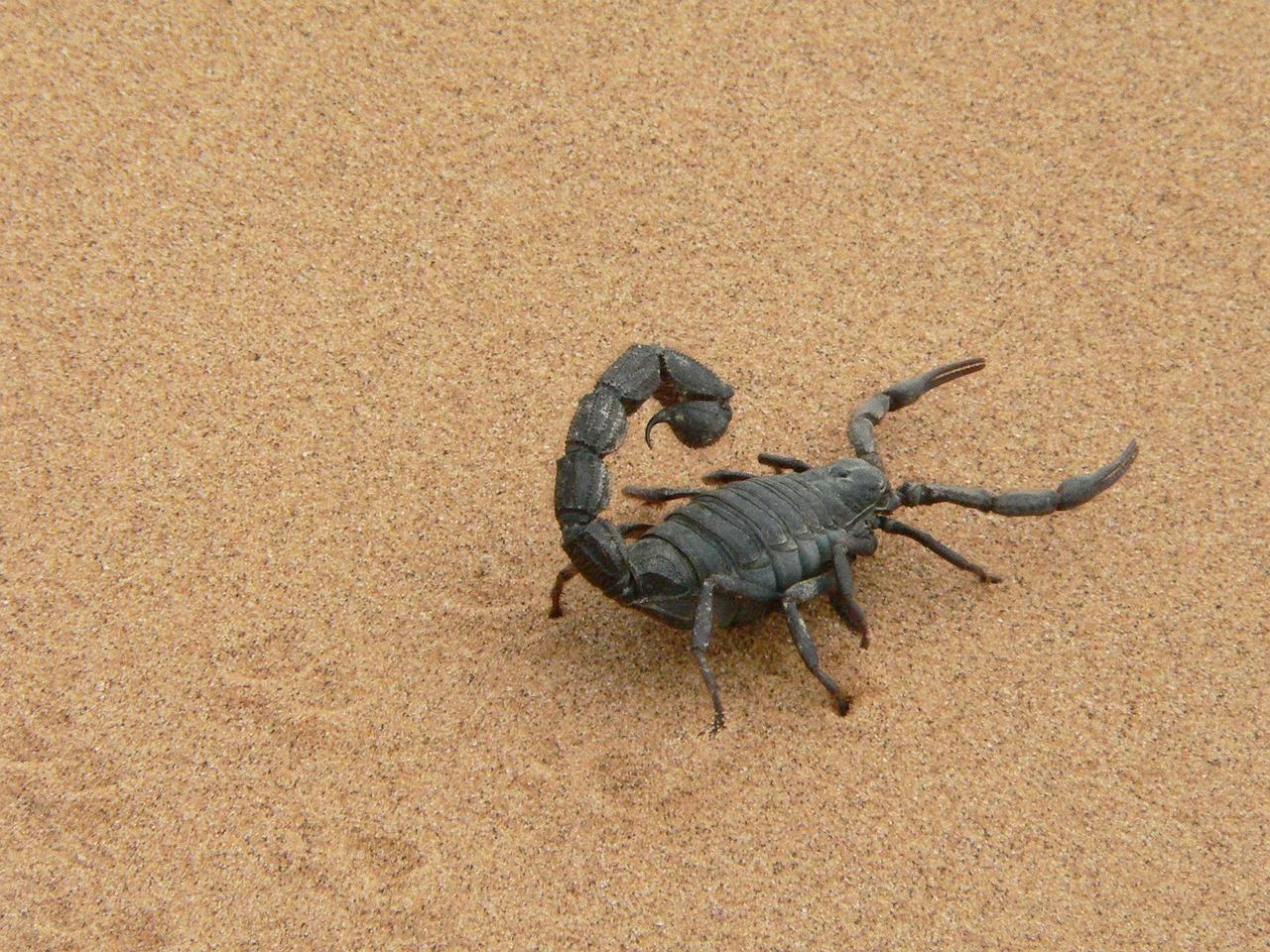 Couple finds poisonous scorpion in luggage after holiday in Namibia