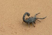 Photo of Couple finds poisonous scorpion in luggage after holiday in Namibia
