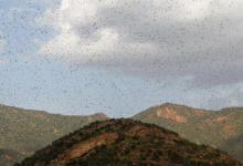 Photo of UN calls for locust assistance in East Africa