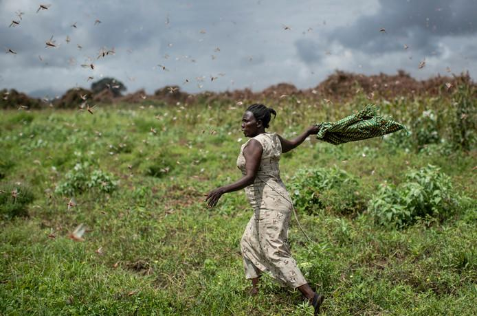 Desert locust invasion now affects South Sudan