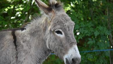 Photo of What to know why Kenya ban slaughtering of Donkeys