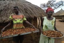 Photo of Locusts invasion in Uganda:  residents turn locusts into food