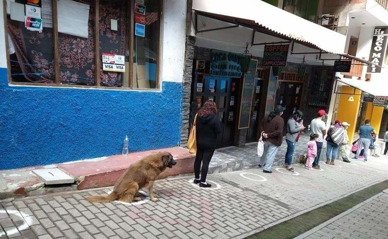 Photo of Dog waits in line in front of the supermarket on behalf of his owner