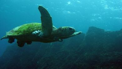 Photo of Discover the largest colony of green sea turtles in the world