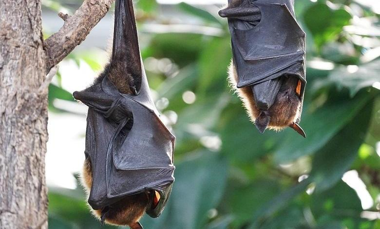 Photo of Bats also adhere to the distance rule (if they are sick)