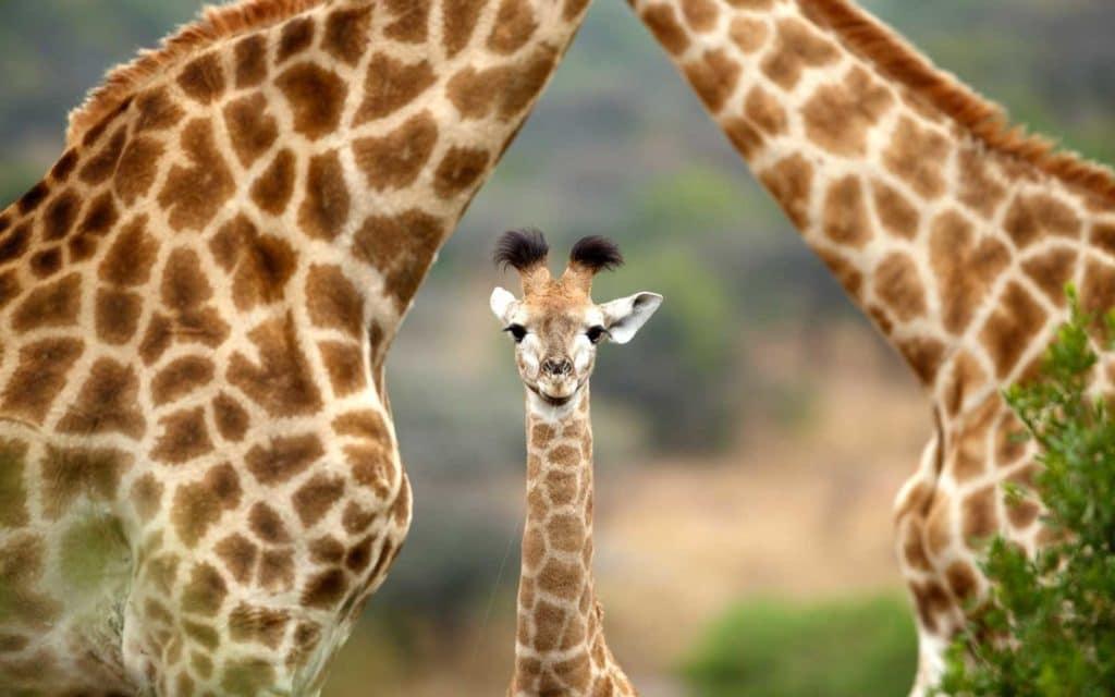 Babies Wallpaper Cute Les B 233 B 233 S Animaux Les Plus Mignons D Afrique Du Sud
