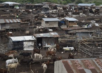 [FILES] A general view of a livestock market. (Photo by PIUS UTOMI EKPEI / AFP)