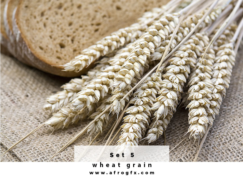 Collection of wheat heads Set 5 Stock Photo