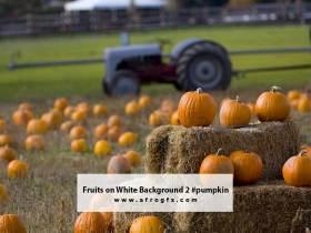 Fruits on White Background 2 #pumpkin