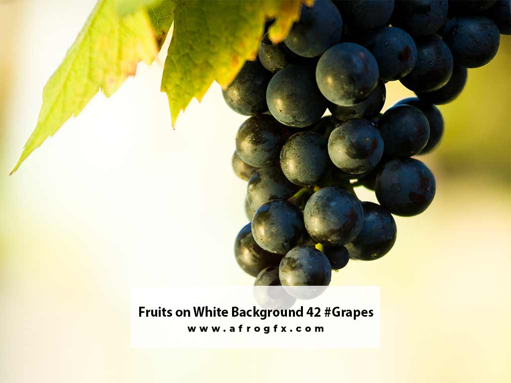 Fruits on White Background 42 #Grapes