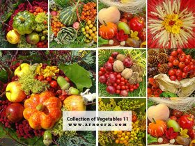Collection of Vegetables 11