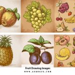 Fruit Drawing Images, Stock Photos