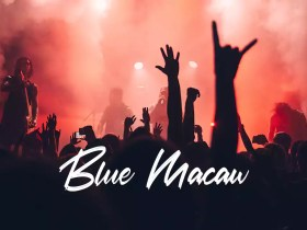Blue Macaw - No Copyright Audio Library