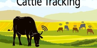 Chipsafer is tackling cattle rustling in Kenya with a remote chip tracking technology