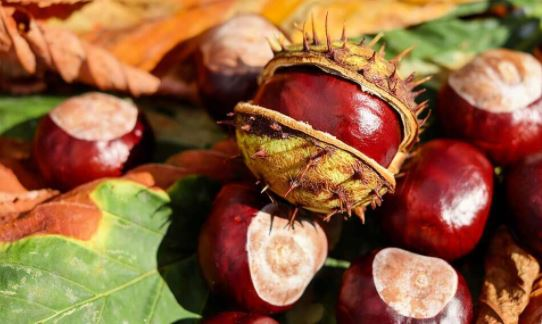 6 surprising health benefits of Chestnuts