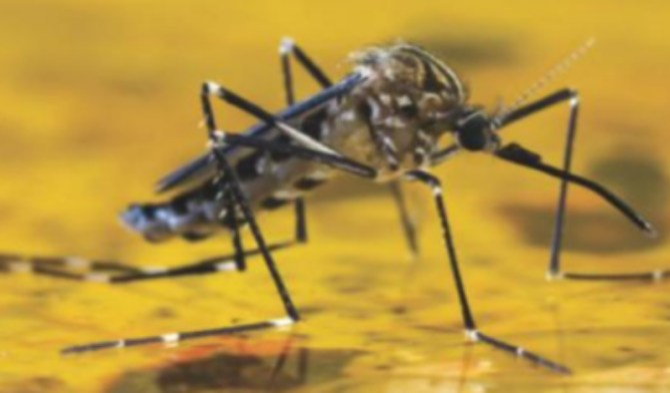 Yellow fever scare in Kogi as unknown illness 'kills 50'