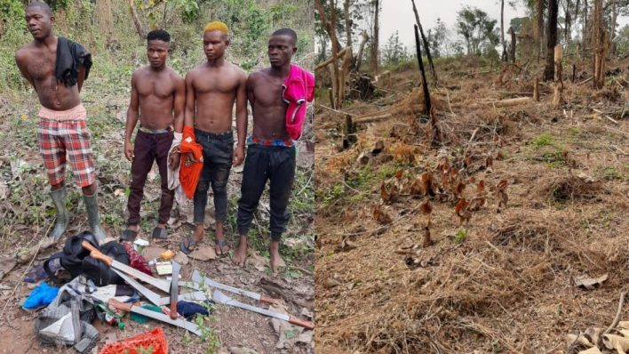 Indian hemp farmers arrested in Ondo forest reserve