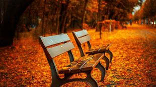 Autumn park benches