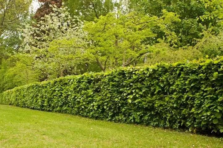 Goedkope Omheining Tuin : Goedkope tuinafsluiting overzicht van goedkoop naar duur
