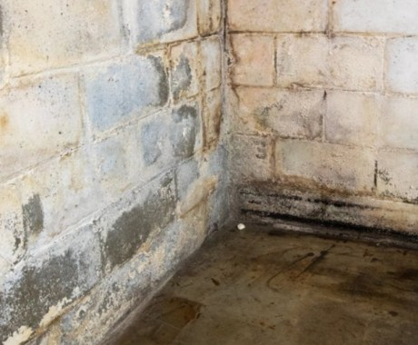 Here's How to Stop Mold Growth with Basement Waterproofing