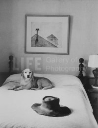 Alfred Eisenstaedt, Andrew Wyeth's Bed, Hat and Dog