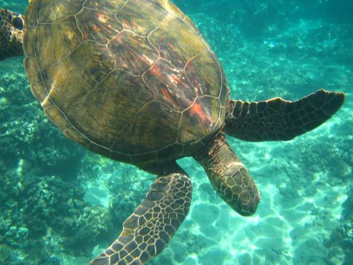 Top 10 activities in maui, Maui Travel Video - Activities - Maui-Travel-Beach