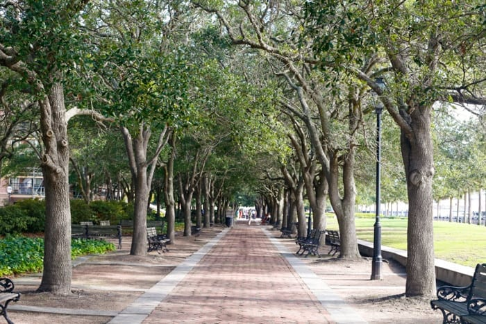 Perfectly Tree lined streets and parks in Charleston, South Carolina.