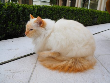 La Chat du Bristol / The Bristol Hotel cat: Fa-raon