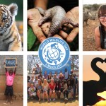 Enter for the UN World Wildlife Day 2017 Photo Competition