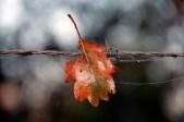 16 Leo van Boxsel Pannenhoef in de herfst 2