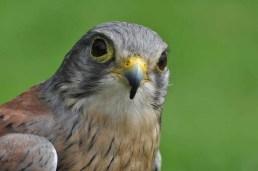 57 Joop Rijndorp Bird 1