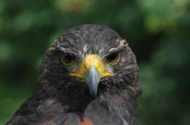 60 Joop Rijndorp Bird 2