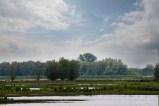 140601 Biesbosch (10) Els Gijzen
